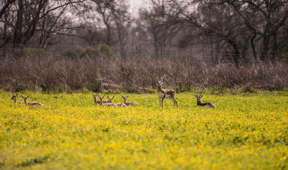 Green Briar Ranch-140.jpg