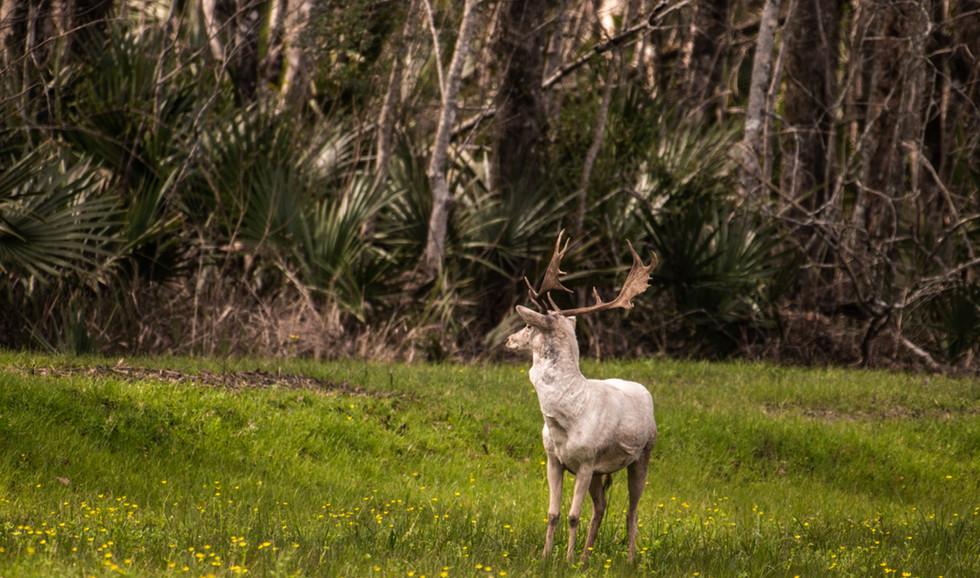 Green Briar Ranch-137.jpg