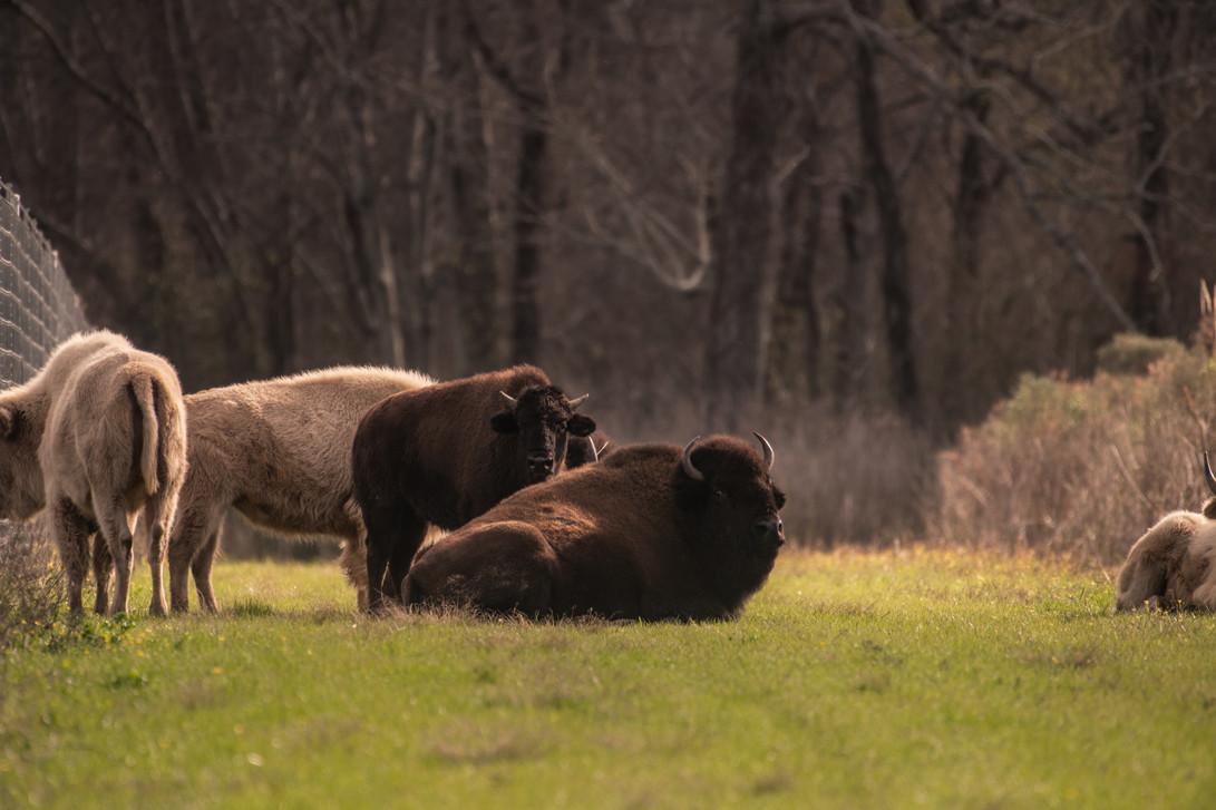 Green Briar Ranch-218.jpg