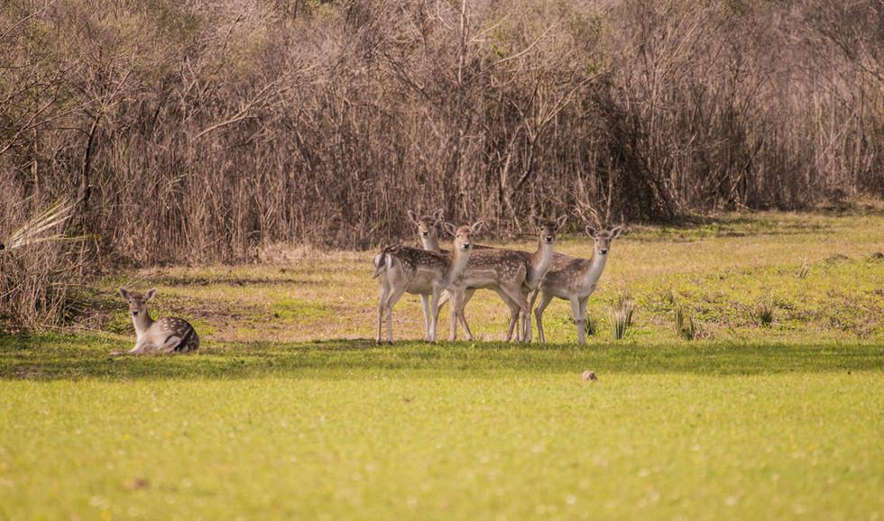 Green Briar Ranch-132.jpg