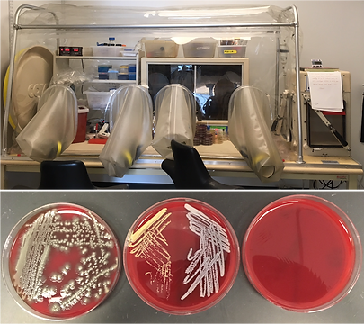 microbiol.png