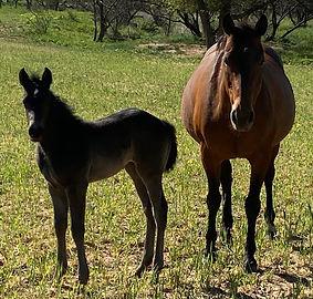 horsefilly4.jpg