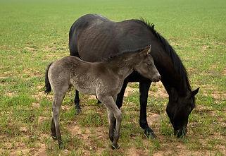 horsefilly1.jpg