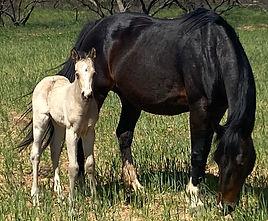 horsefilly3.jpg