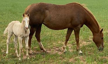 horsecolt2.jpg