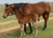 horsefilly2.jpg