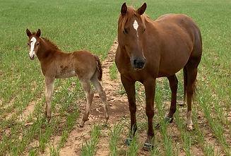 horsecolt1.jpg