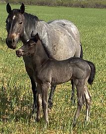 horsecolt3.1.jpg