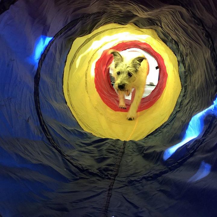 tunnel 2 - Copy.jpeg