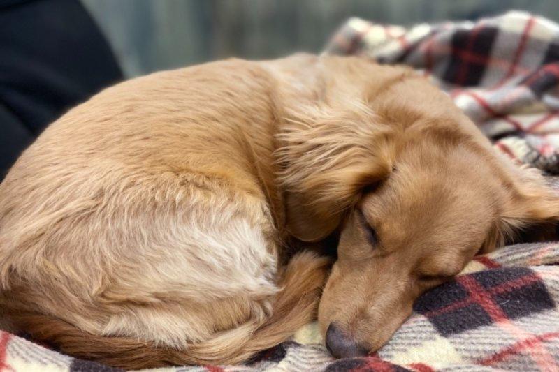 ginger slumber.jpeg