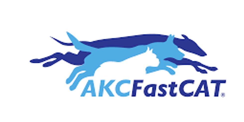 AKC All- Breed Fast CAT