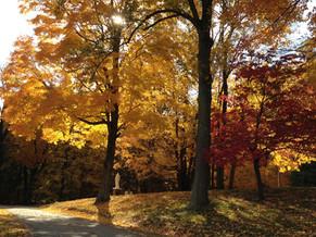An Autumn Reflection