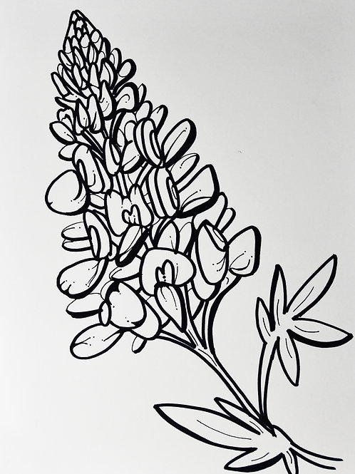 Blueboonet coloring page