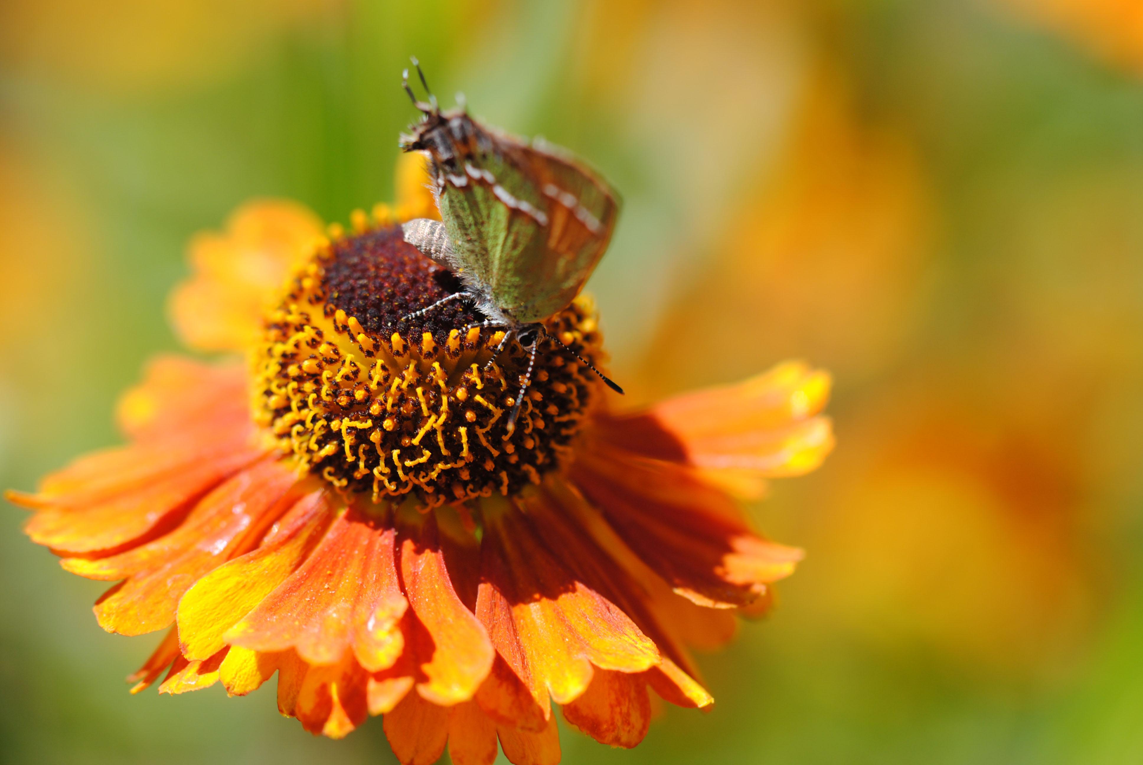 Fluttery Shy