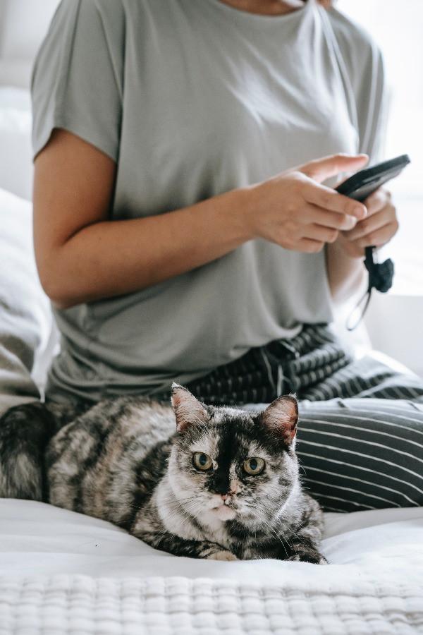 Jeune femme recevant un sms sur son téléphone portable, avec le chat à côté d'elle
