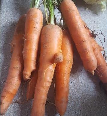 Q & A - Home Grown Veggies
