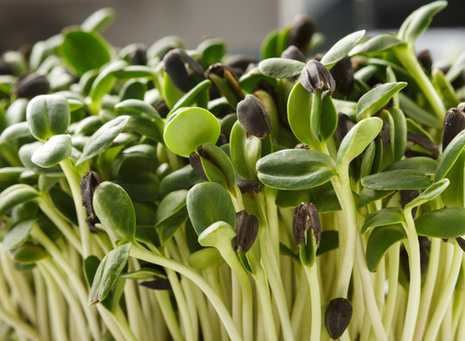 Q & A - Are Sprouts Safe?