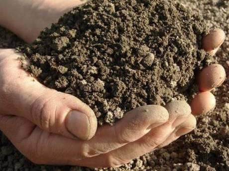Eating Dirt and Increasing Allergens