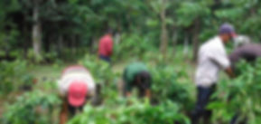 rainforest-capital-land-management.jpg