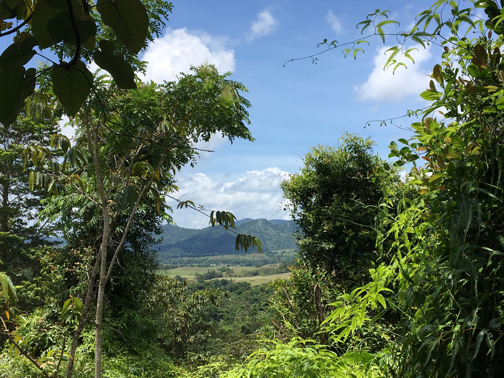 Mamoni Valley Preserve