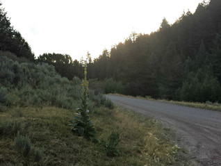 Taylor Creek Road-Trail Review