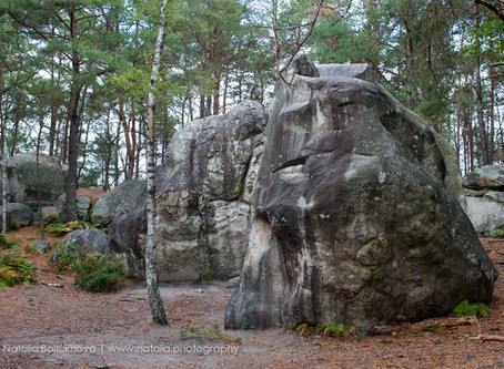 Fontainebleau's Climbing Conservation Efforts in 2020