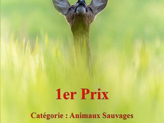 1er Prix au Salon de la photo de Luxembourg 2019