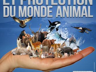 Exposition avec le Forum Terre des bêtes