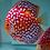Thumbnail: Red Panda
