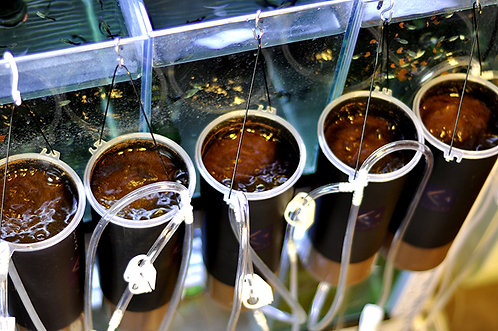 Artemia Hatch System Tool Baby Brine Shrimp Live Baby FishFood Fresh