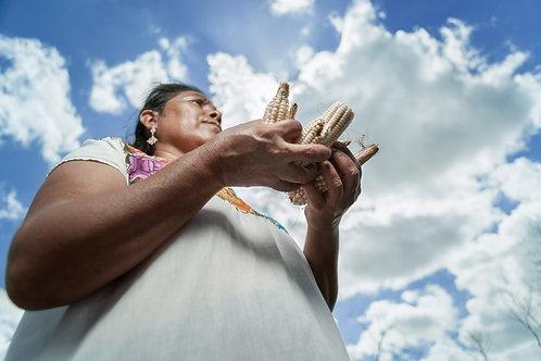 Los Originarios - Maya Yucateca | Mujer llevando maíz en sus manos.