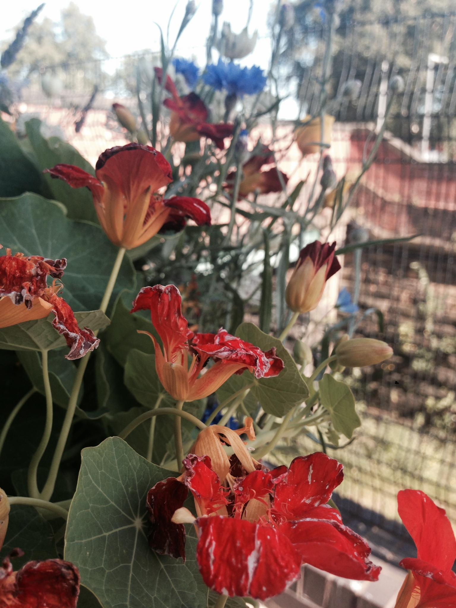 Lamentflowers