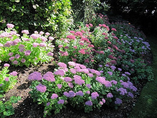 Landscaping Tips: Find Out What Flowers Grow Well In Hot And Dry Climates!