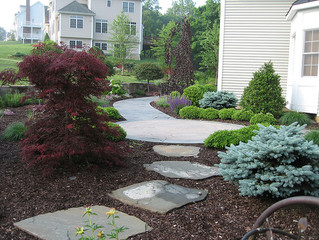How Do You Choose Trees For A Landscaping Project?