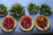 herbal harvest.jpg