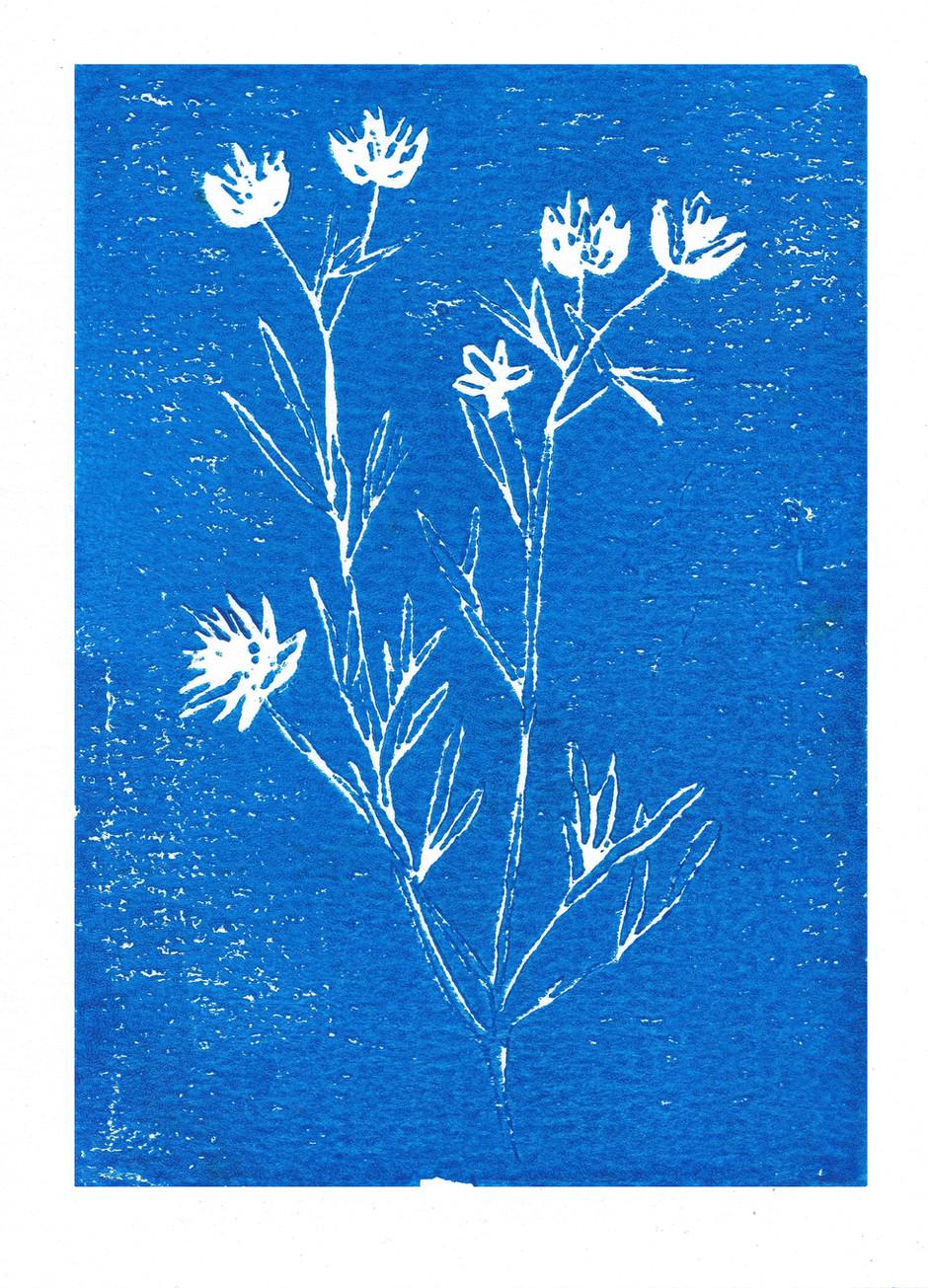 Flowers in Cobalt