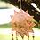 Thumbnail: Mystical Mandala Chime