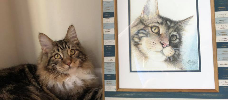 Westley, the handsome cat