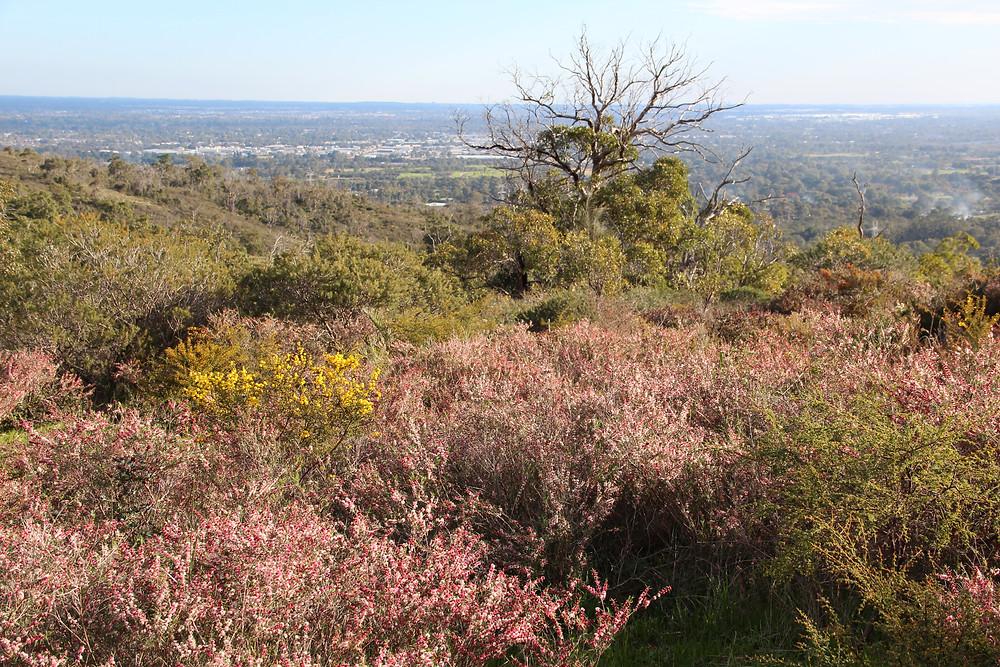 Walking Tour - Flora, Fauna & History