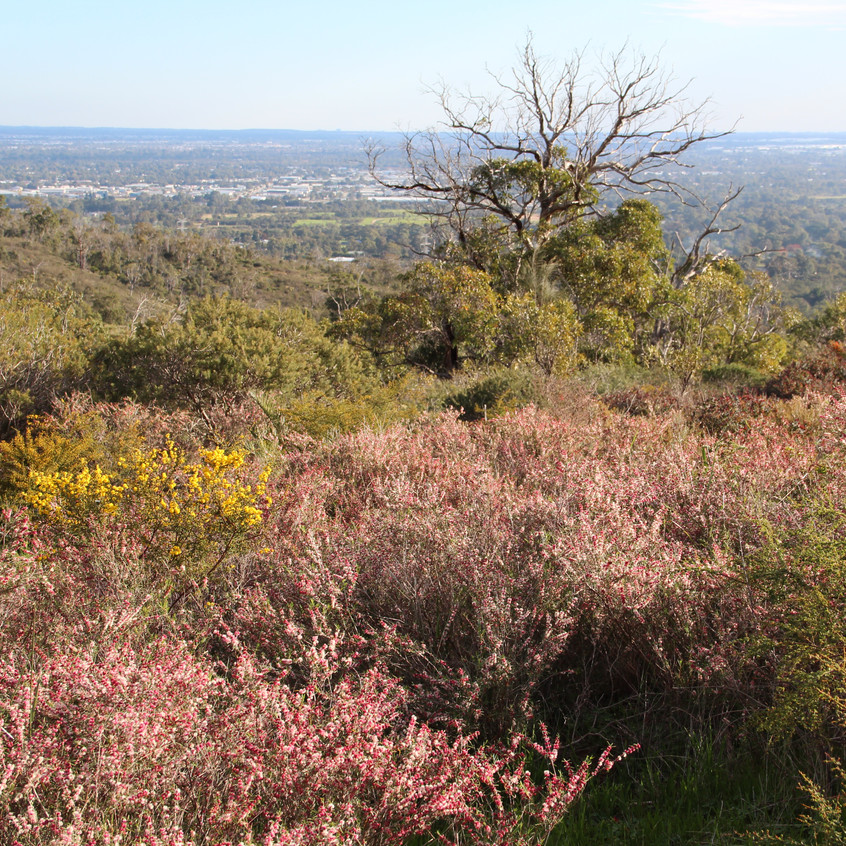 Flowers in Perth Hills (24)