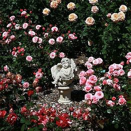 Open Rose Garden