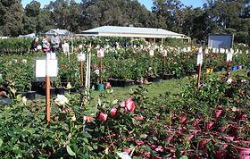 Melville's Rose 'n' Garden