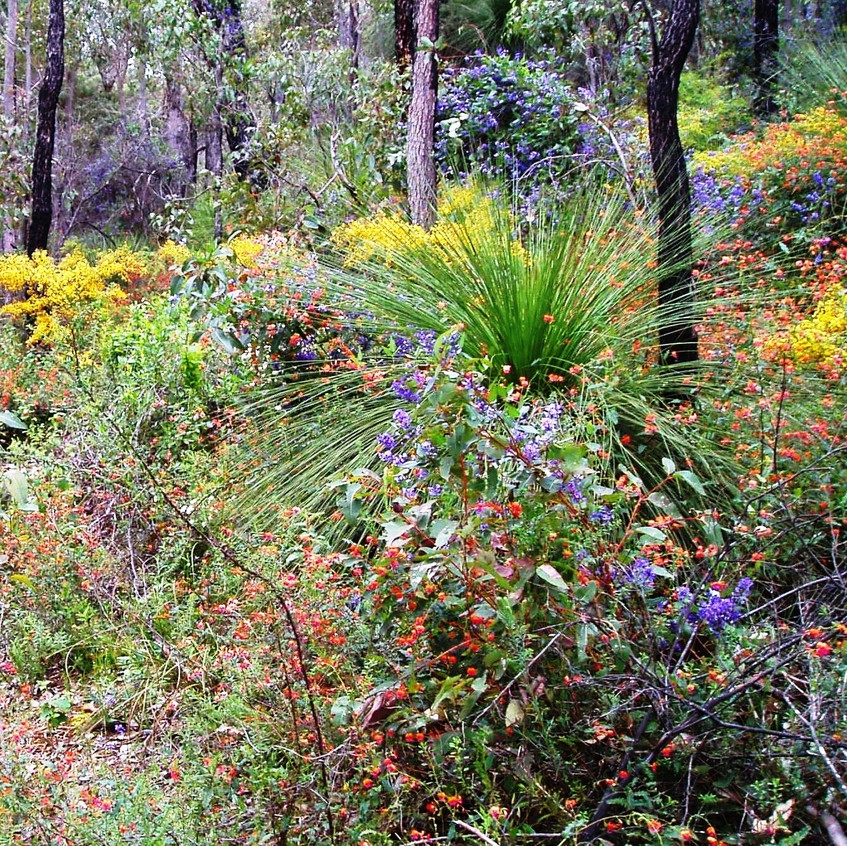 Wildflowers - Flowers in Perth Hills