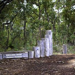Highlights of the Bibbulmun | Kalamunda to Mundaring Guided Hike