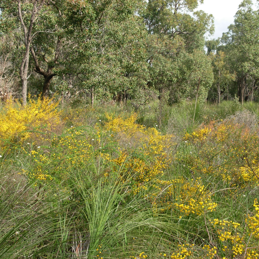 Flowers in Perth Hills (13))
