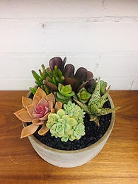 Succulent Bowl Design Workshop