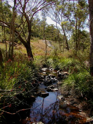 View up Piesse Brook_early summer