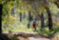 Walking Trails.jpg