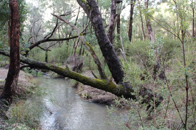 Piesse Brook 2