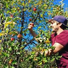 Irymple Orchard